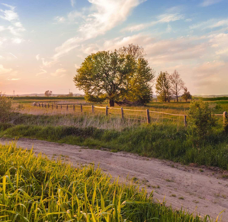 liquidação de crédito rural pronaf